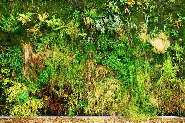 Vente de plantes le 2 d cembre mairie du 16e for Vente de plantes