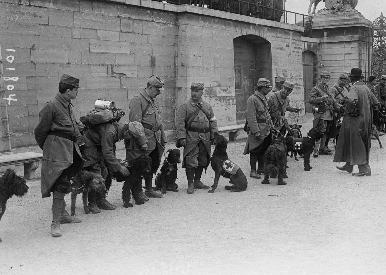 Guerre 1914-1918. Revue aux Tuileries d'une section de chiens sanitaires partant pour le front. Paris (Ier arr.), 1915.